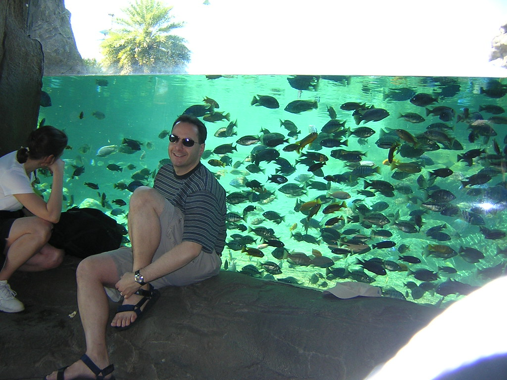 African Cichlid Tank at Busch Gardens, Tampa   We were ...