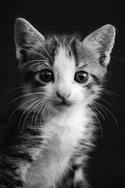 Best Value Cat Cym Perth