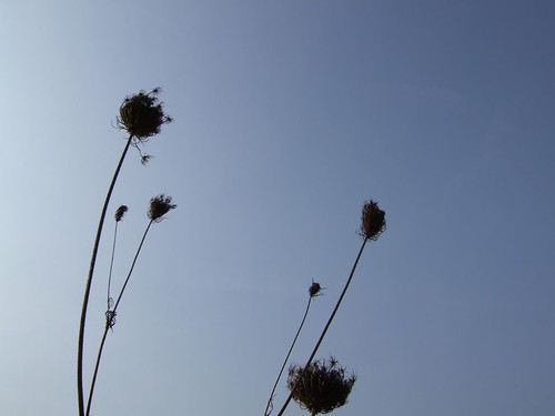 weeds in the wind | by mrykly