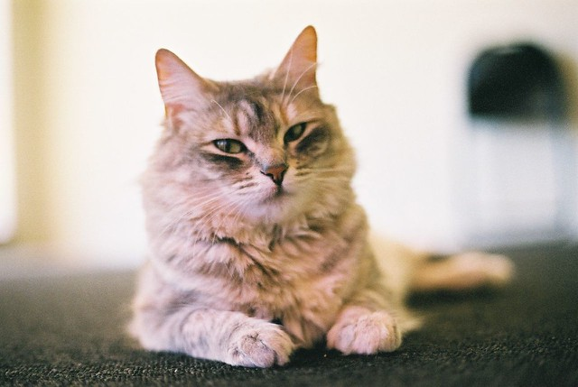 Ally the Cat | Jinny | Flickr