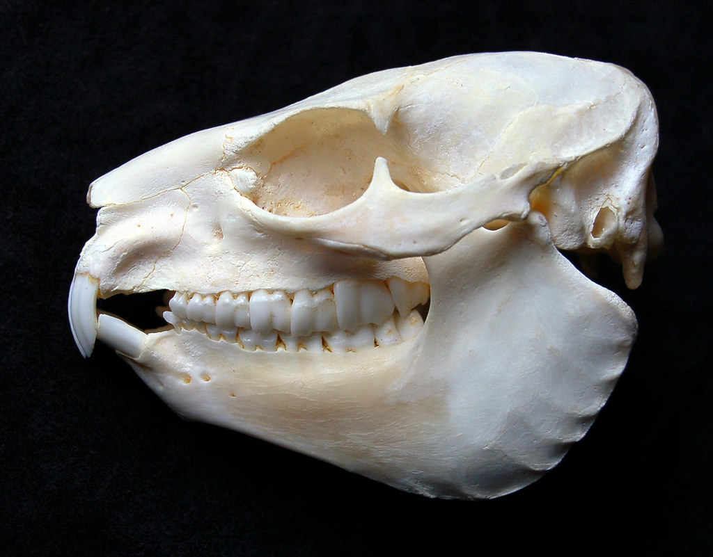 Зубы в черепе ребенка фото