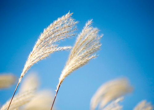 Whispy Winds Move Ornamental Grass | by www.toddklassy.com