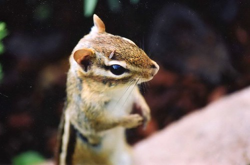Chipmunk and Seed | by Peggy Collins