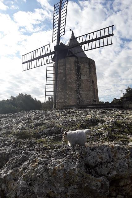 Karla Kunstwadl in der Provence ... Mai 2018 ... Fontvieille ... Die Mühle von Daudet ... Foto: V&J