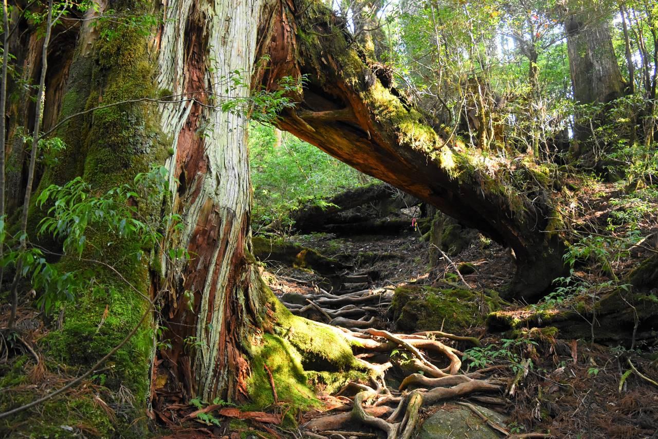 太忠岳 登山道の倒木