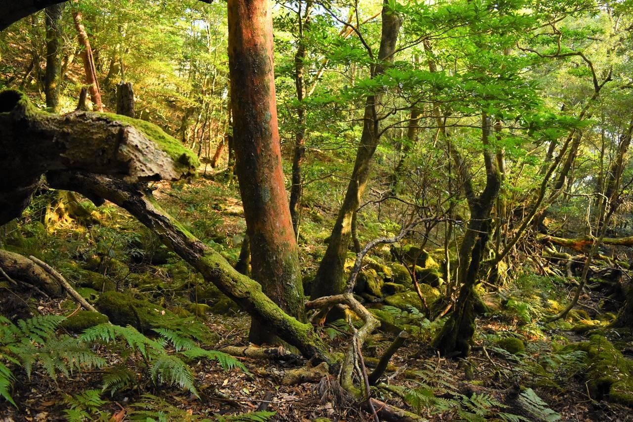モッチョム岳の森