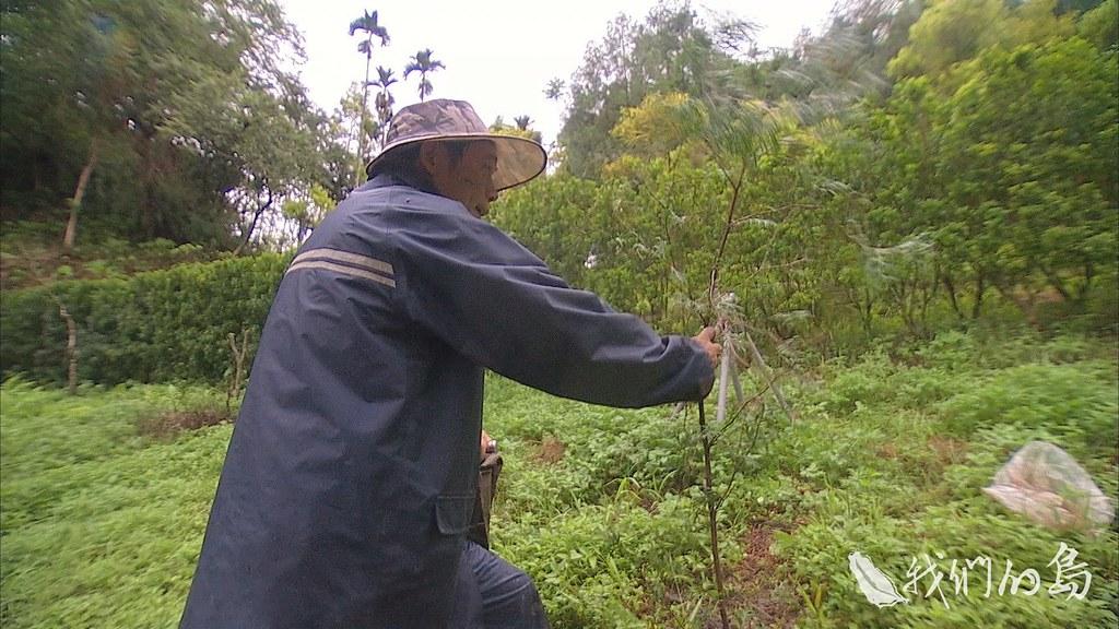963-2-12s在雲林縣古坑鄉的張萊恩,拒絕農藥化肥,親手種下了肖楠、香桂、香椿、桃花心木等兼具經濟與環境功能的樹種。