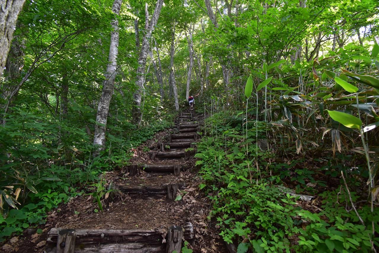 平標山登山道 序盤の樹林帯の急登
