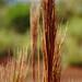 Reed, Red Dirt Falls