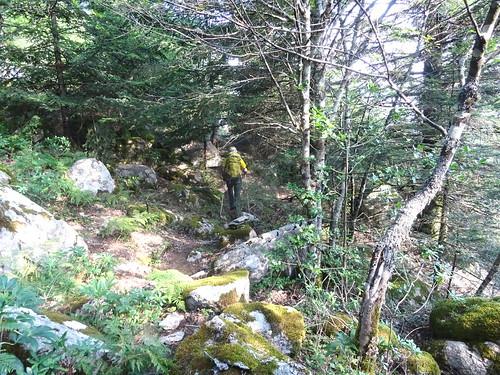 Sur la trace cairnée de la traversée Funtanedda - Apaseu : dans la forêt