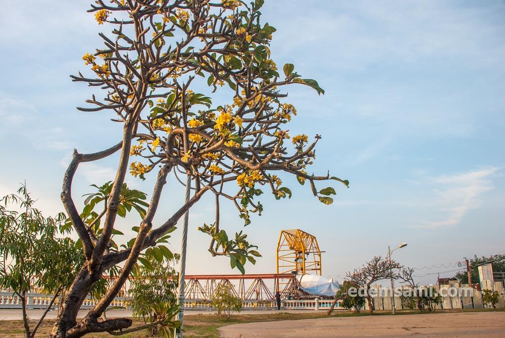 Дерево с желтыми цветами Таиланд