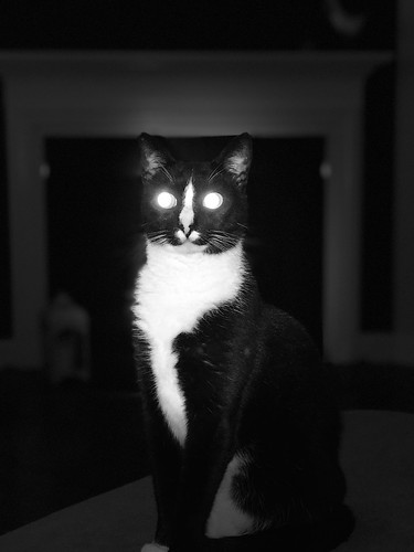 Daemon cat | by amblin