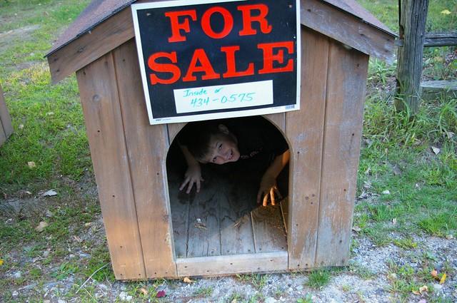 Weird Dog Houses