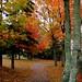 An autumn lane