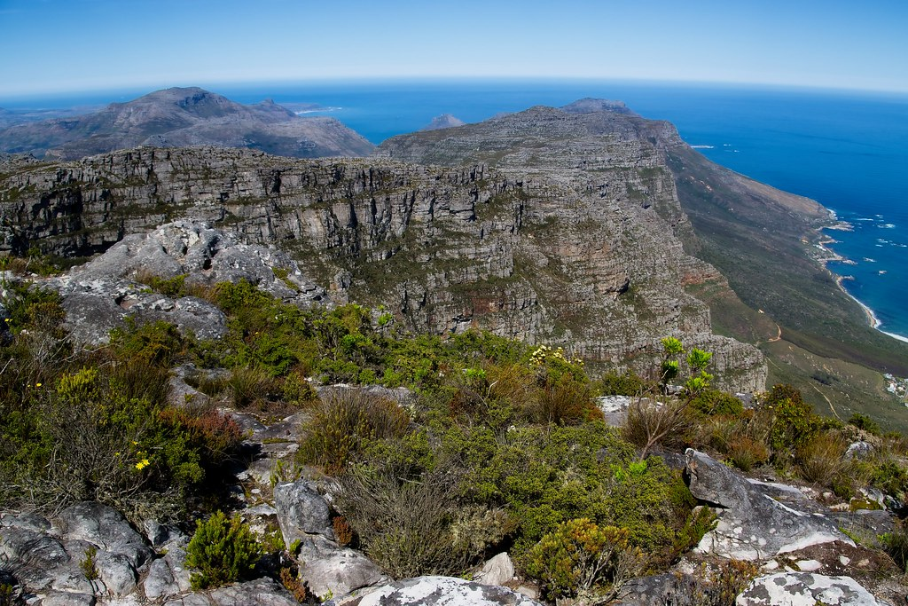 Biodiversity Of Mountain Flora Shot From Table Mountain