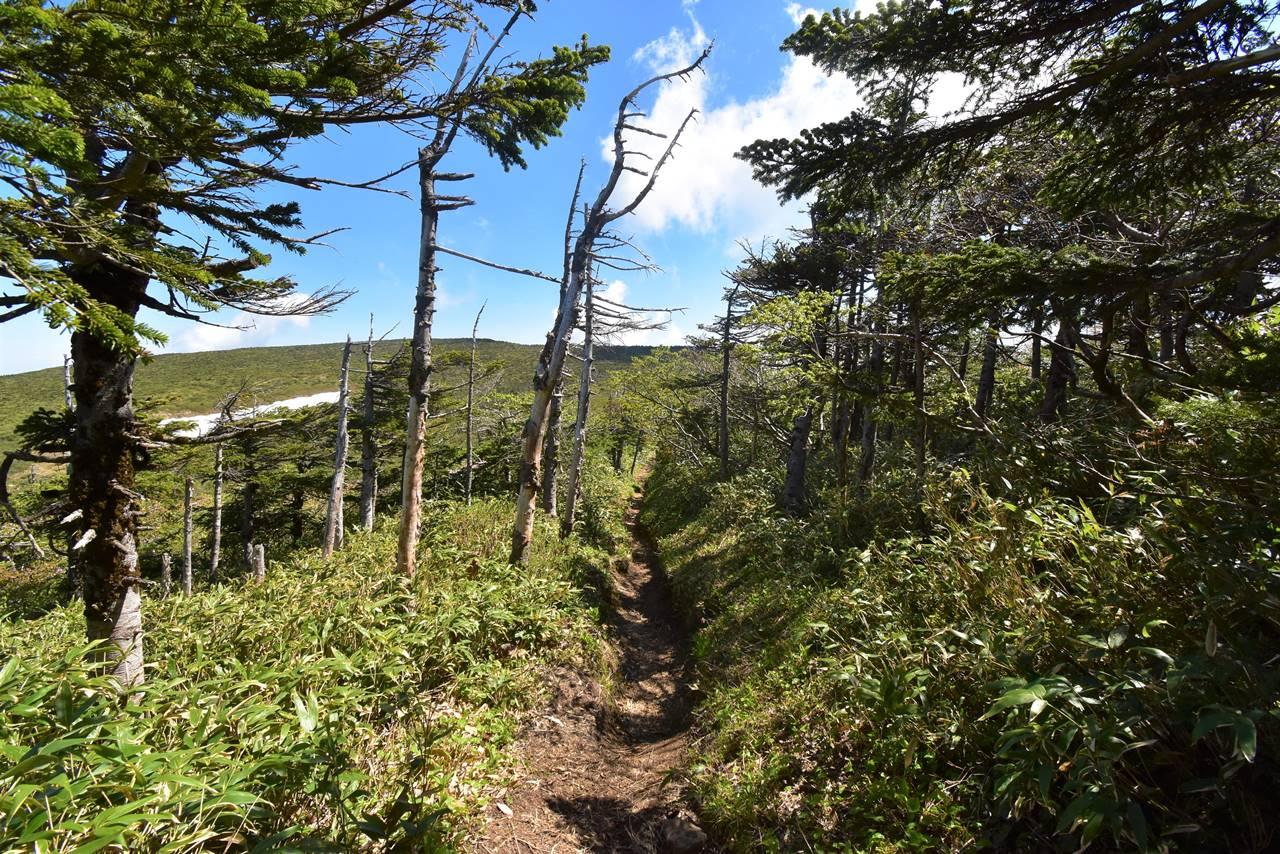 南屏風岳から屏風岳へ稜線ハイク