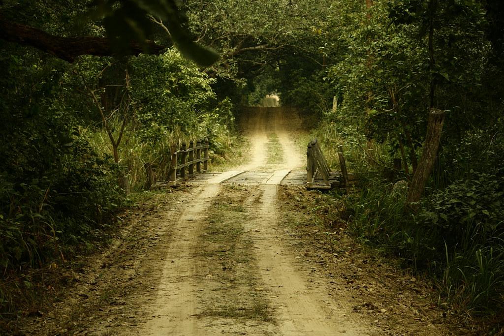 森林與耕地缺乏緩衝地帶,人類在日間活動時不小心闖入老虎棲地,是人虎衝突的主要成因