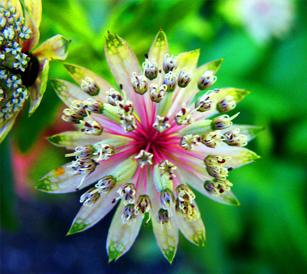 Beautiful Flower Thank You: Stanley Zimny (Thank You For 32 Million