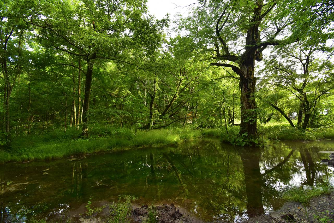 上高地 池と新緑