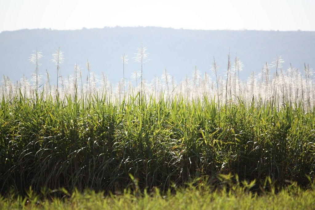 遮蔽良好的甘蔗田成為草食動物與掠食者的棲身之所。報告建議人們,只要改變一些習慣,就能減少攻擊事件發生。