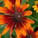 Colourful Summer Flower