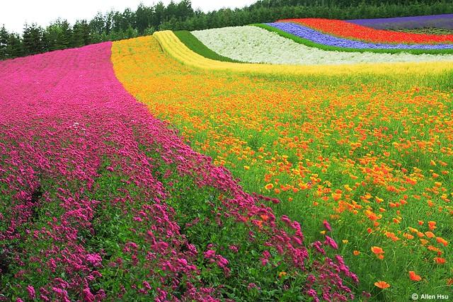 Colorful Garden | Allen Hsu | Flickr Colorful Garden