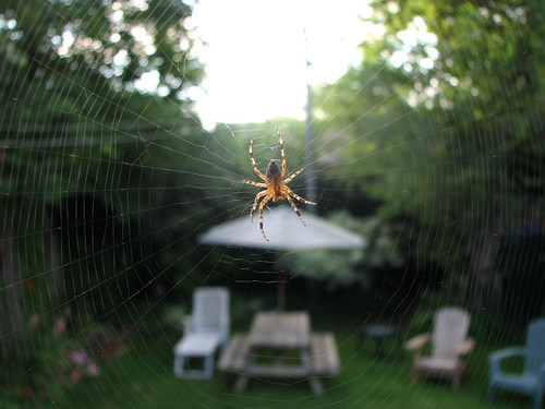spider's world | by Yer Sister