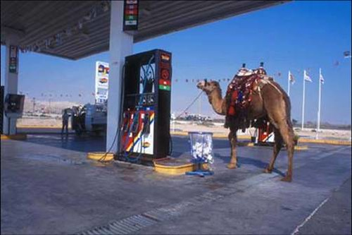 Camel Parked At An Israeli Gas Station I Find This