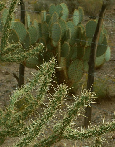 Prickly Desert View, Hackberry | by cobalt123