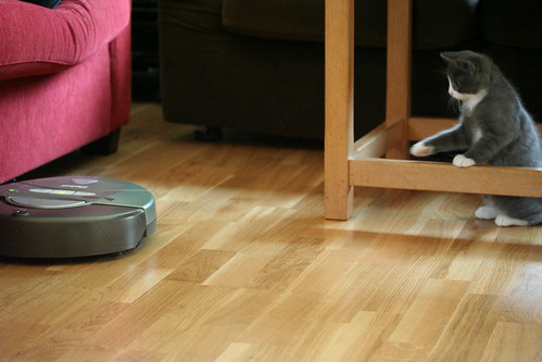 Observing the Roomba from a safe distance | by Eirik Newth