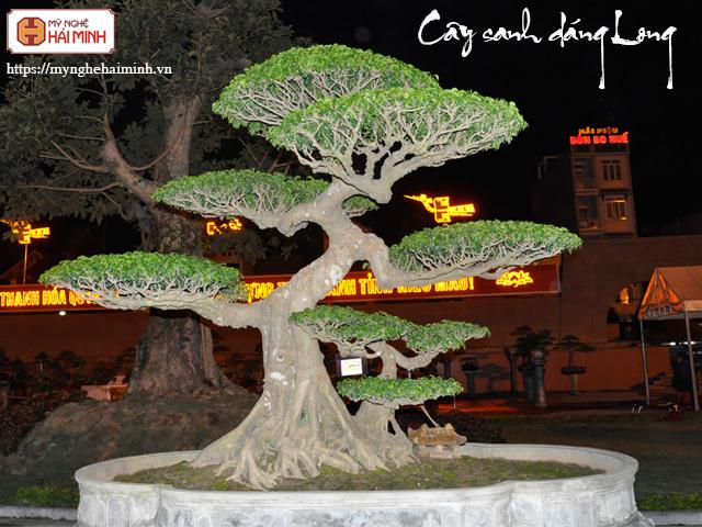 Cay sanh dang long mynghehaiminh CAY0001p