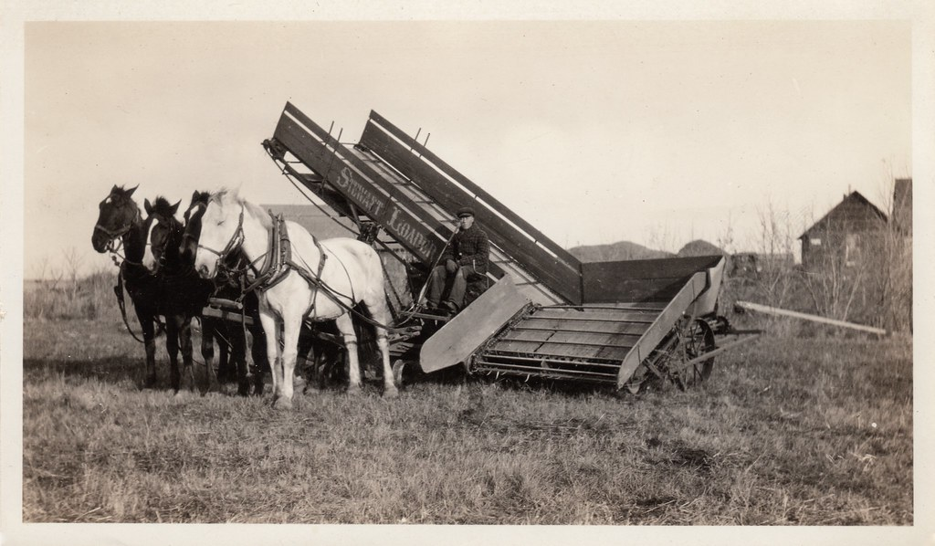 farmer with team of horses and stewart sheaf loader flickr
