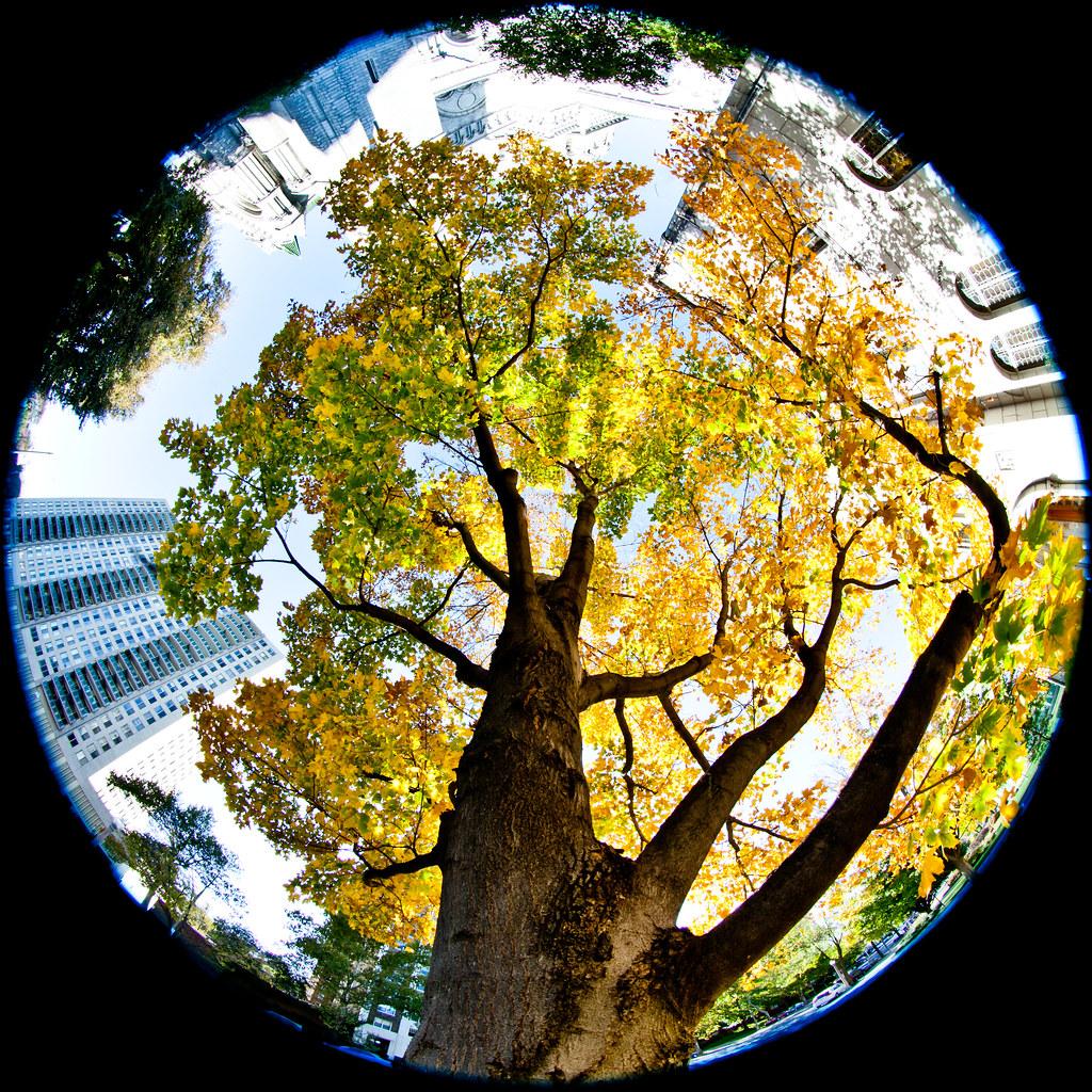 都市綠化。圖片來源:Thomas Hawk(CC BY-NC-ND 2.0)