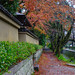 Autumn garden in Kyoto, Japan