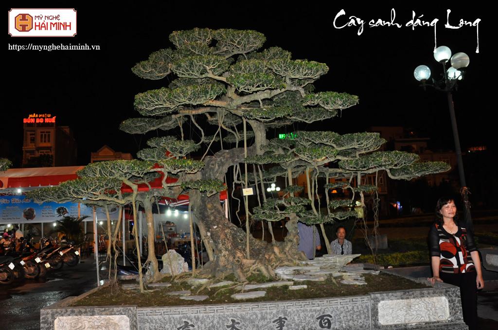 Cay Sanh Dang Long mynghehaiminh SANH13