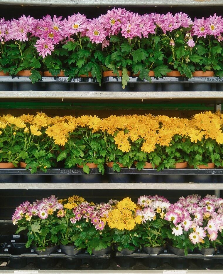 flowers on shelving