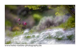 Steingarten Photos On Flickr | Flickr