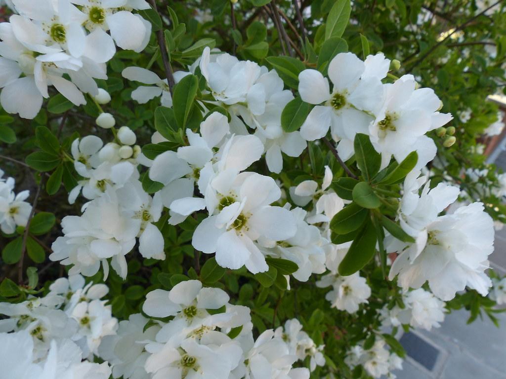 White Flowers River Crane Sanctuary Flickr