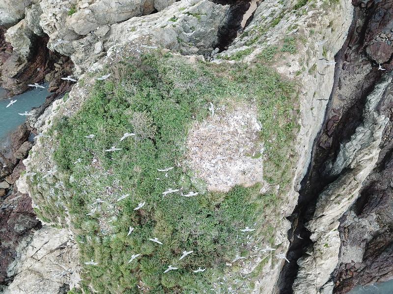 燕鷗群喜愛在平坦地面上築巢繁殖