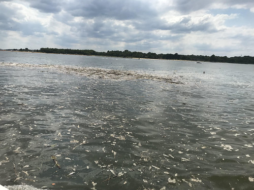 Picture of Debris in the water of the bay.