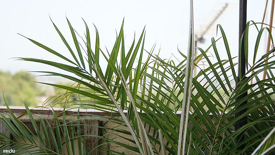 plantas para terrazas de áticos