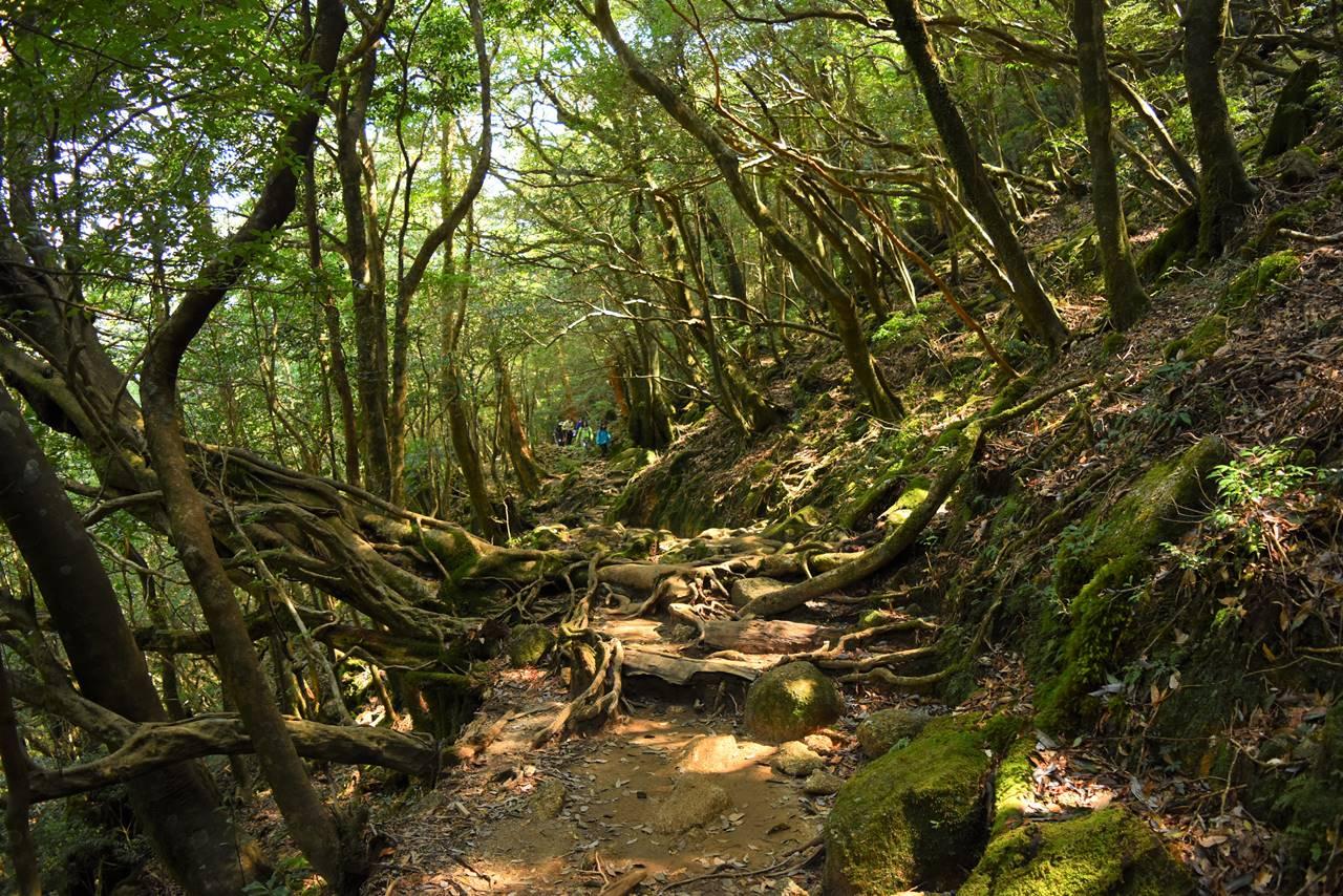 縄文杉~白谷雲水峡トレッキング