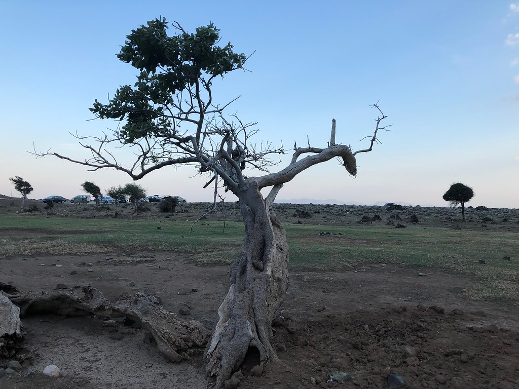 Half Dead Tree A Tree Is Half Dead And Half Alive In South Flickr
