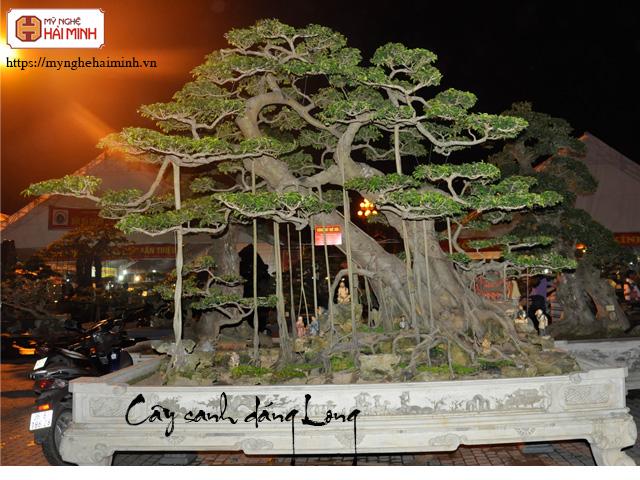 Cay sanh dang long mynghehaiminh CAY0001k