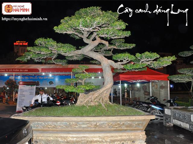 Cay sanh dang long mynghehaiminh CAY0001l