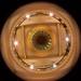 QVB Eye