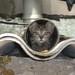 Drainpipe Kitten