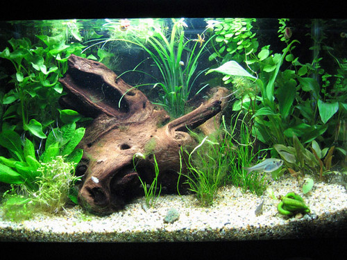 5 Gallon Planted Tank Felixsalazar Com Pages Flickr