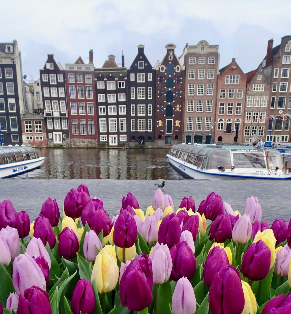 Tulpen Uit Amsterdam. Tulips In Amsterdam.