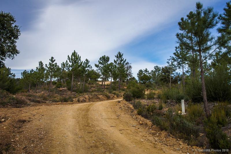 Subiendo hacia la Serra de Can Pelló